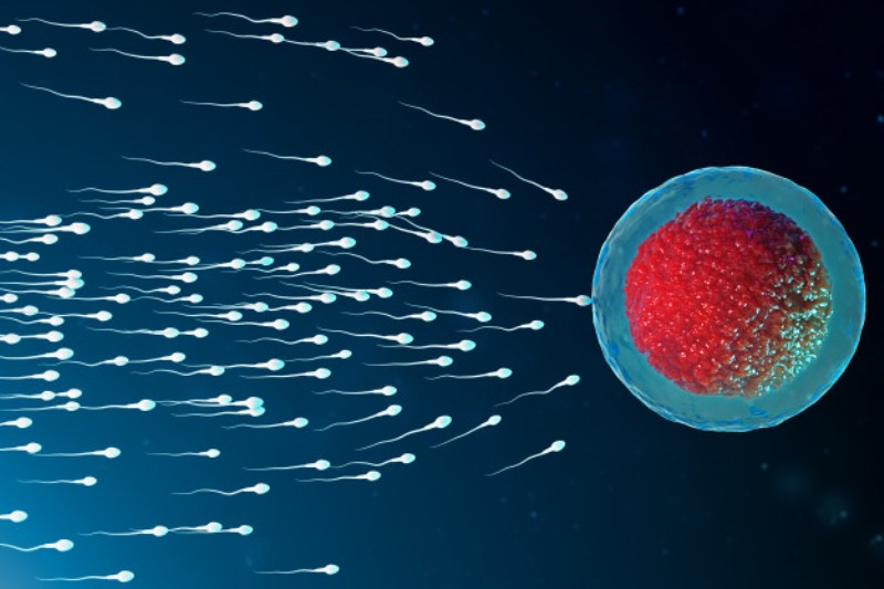 Sperm DNA Fragmentation – Factors, Causes, Significance, Tests, and Treatment